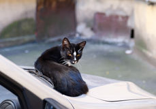 Black and white stray cat sitting on car Stock Photos