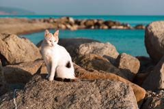 A black and white stray cat sitting on a rock near the turquoise sea. Sunset light. A black and white stray cat sitting on a rock near the sea. Sunset light stock images