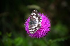 Butterfly on a purple flower stock photography