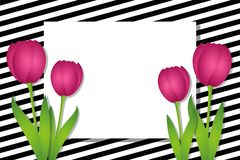 Black and white striped card with pink tulips stock illustration