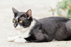 Black and white striped cat is looking something to eat in the morning. Black and white striped cat is looking something to eat in the summer morning royalty free stock image
