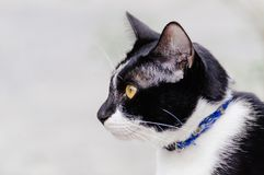 Black and white striped cat is looking something to eat in the morning. Black and white striped cat is looking something to eat in the summer morning royalty free stock photography