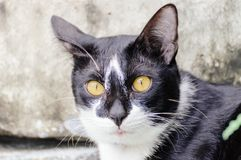 Black and white striped cat is looking something to eat in the morning. Black and white striped cat is looking something to eat in the summer morning stock photo
