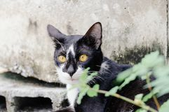 Black and white striped cat is looking something to eat in the morning. Black and white striped cat is looking something to eat in the summer morning stock photography
