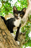 Black and white striped kitten climbing tree Stock Photos