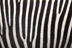 Black and White stripes Stock Photos