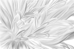 Black and white style flower closeup stock illustration