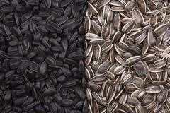 Black and white sunflower seeds as background Stock Images
