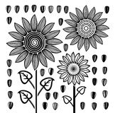 Vector black and white sunflowers and seeds. Vector stylized black and white drawing of sunflowers and seeds Royalty Free Stock Image