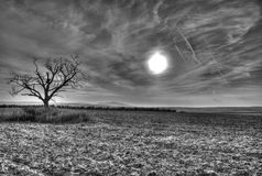 Black and white sunny day Stock Photography