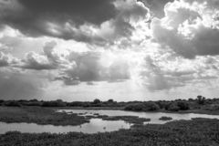 Black and White Sunset with Clouds and Lake in Pantanal, Brazil royalty free stock photos