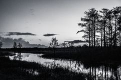 Black and white sunset through the trees of the swamps stock photos