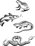 Black and White Symbols of Animals. Fish, reptiles and amphibians in logo stylization Stock Image