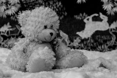 Black and White Teddy Bear. Sitting on his favourite soft rug with his horse blanket in the background. just relaxing stock photography