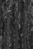 Black and white textured wall with mold. Black and white old textured wall with mold background royalty free stock photo