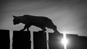 Black and white toned image with a cat walking on the fence Stock Images