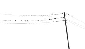 Black and white toned image with a lot of birds on wires Stock Images