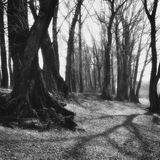 Black and white toned landscape in an old park Royalty Free Stock Image
