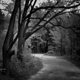 Black and white toned landscape with a path in a park Royalty Free Stock Photography
