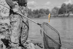 Black-and-white toned natural pond. Trophy fishing. Small goldfish on fishing line, old fish net with holes. Concept Royalty Free Stock Photography