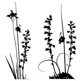 Black and white Traced plants silhouettes collection Royalty Free Stock Image