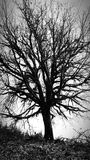 Black and white tree Royalty Free Stock Photos