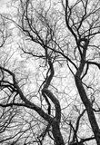 Black and white tree Stock Photography