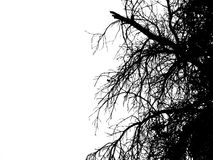Black and white tree. Digital Natural abstract black and white treo Stock Image