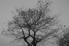 Black and white tree Stock Photo