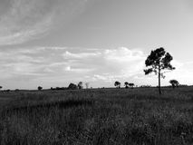 Black and white tree in a field royalty free stock photo