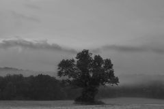 Black and White Tree In Fog Stock Photos