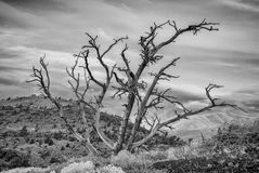 Black and White tree on a ridge with clouds Royalty Free Stock Photo