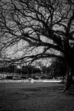 Black and white tree. And road scene Stock Images
