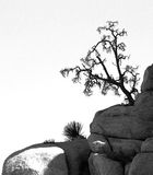 Black and white tree and rock silhouettes Royalty Free Stock Photography