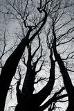 black and white tree Stock Image