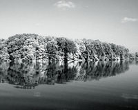 Black and white trees Royalty Free Stock Images