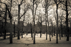 Black and white trees in garden of Royal Castle San Ildefonso Stock Photos