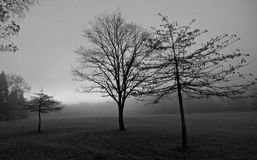 Black and White Trees at Morning Light Royalty Free Stock Photos