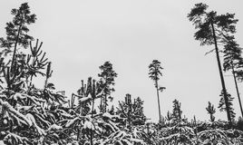 Black and White Trees Photography Stock Images