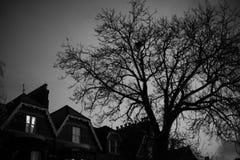 Black and white trees silhouettes Stock Photos