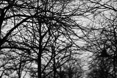 Black and white trees silhouettes Stock Photography