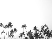 Black and white tropical palm trees. Silhouette of tall black and white palm trees on a tropical island with space for copy royalty free illustration
