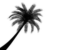 Black and white tropical palmtree palm tree Royalty Free Stock Photos