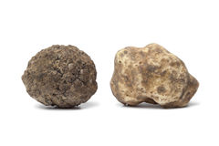 Black and white truffle Royalty Free Stock Photography