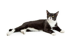 Black and White Tuxedo Cat Lying Down. Beautiful black and white tuxedo cat lying down over white studio background stock image