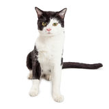 Black and White Tuxedo Cat Sitting Looking Forward Stock Photos