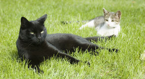 Black and white - two cats Royalty Free Stock Images