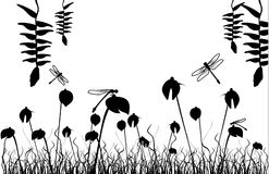 Black and white vector. Black and white natural vector illustration Stock Photography