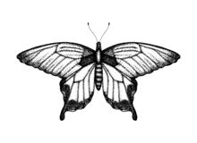 Black and white vector illustration of a butterfly stock illustration