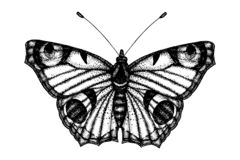 Black and white vector illustration of a butterfly royalty free illustration